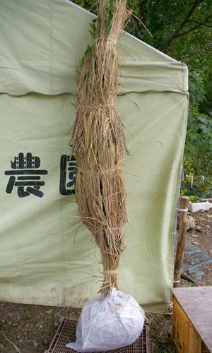 大苗の梱包