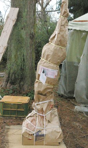 大苗の梱包例
