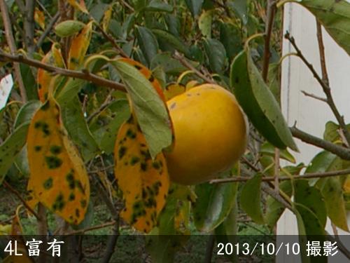 4L富有(ふゆう)