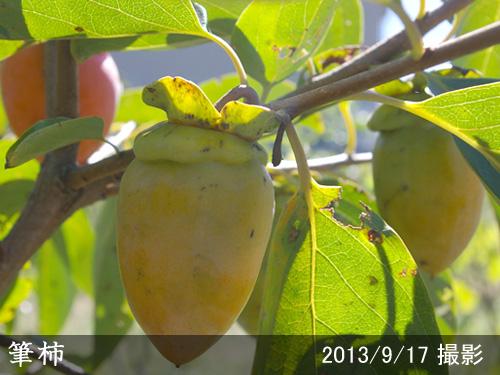 筆柿(ふでがき)