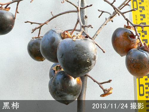 黒柿(くろがき)