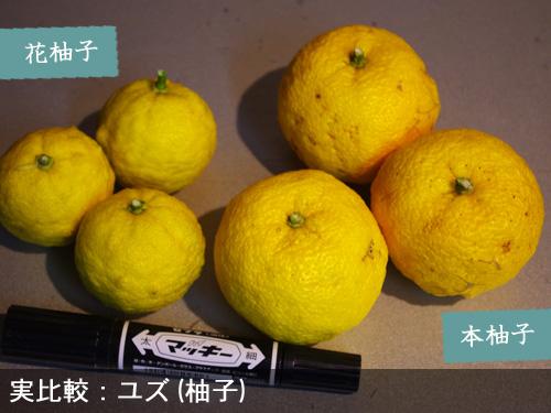 本柚子と花柚子