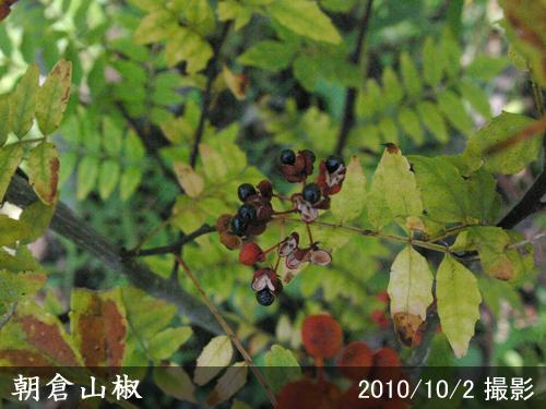 朝倉山椒(あさくらざんしょう)