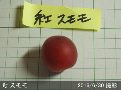 スモモ(李 プラム)紅スモモ