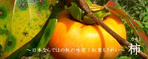 柿について