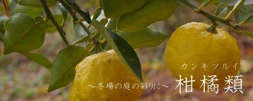 柑橘類について