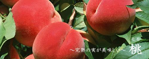 桃について
