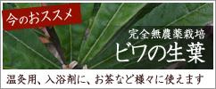農薬不使用の生葉:ビワの生葉 販売中
