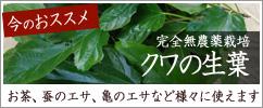 農薬不使用生葉:クワの生葉 販売中
